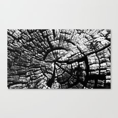 Texture Tree Rings Tree slice Old Tree photograph Natural beauty Canvas Print