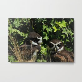 Pair of Spectacled Owls Metal Print