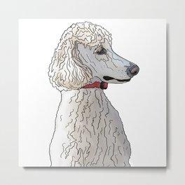 Kyah the White Standard Poodle Metal Print