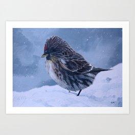 Redpoll Snowstorm Art Print