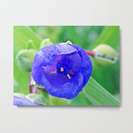 Inside the Blue Flower Metal Print