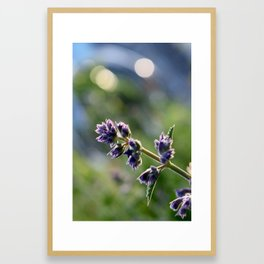 In Bloom 1: Purple Evening Framed Art Print