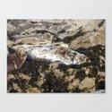 Farne Island Seals by rmchugh89