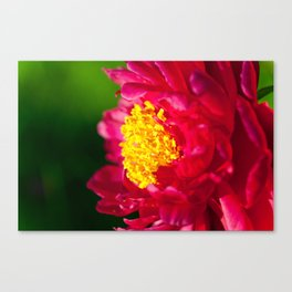 SUN Hooray ! Canvas Print