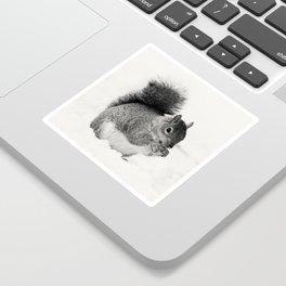 Squirrel Animal Photography Sticker