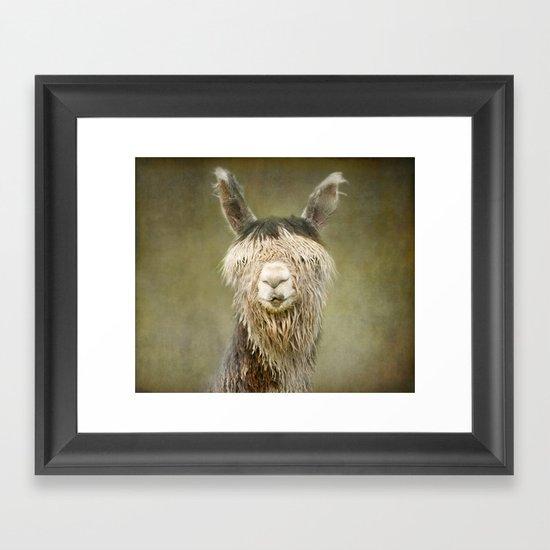 Alpaca with a fringe..! Framed Art Print