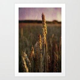 Oat crop close-up vintage photo Art Print