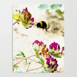 the flight of bumble bee on the dunes I Poster