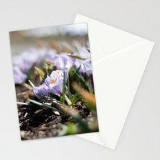 Spring Light Stationery Cards