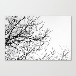 Beautiful Winter Canvas Print
