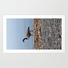 Goose Hunt Art Print