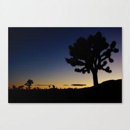 Late night - Joshua tree Canvas Print