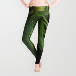 Bamboo Thicket Leggings
