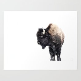 Bison Standing in a Snowstorm Art Print