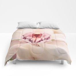 Vivacious Comforters