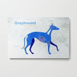 Greyhound anatomy - Grey's anatomy Metal Print