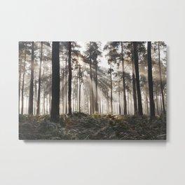 Sunlight burning through mist in a dense woodland. Thetford Forest, Norfolk, UK. Metal Print