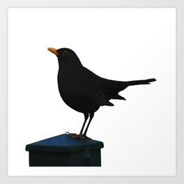 Blackbird Vector Art Print