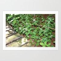 Little Purple Buds. Art Print