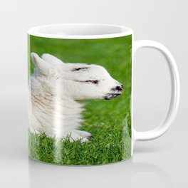 A Sleepy Newborn Lamb In A Field Coffee Mug