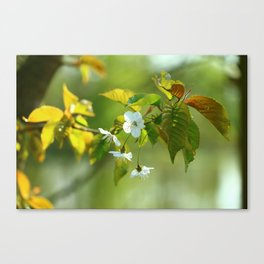 Delicate Spring Blossoms Canvas Print