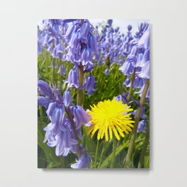 The lonely dandelion Metal Print