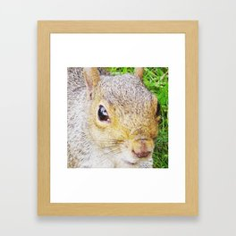 The many faces of Squirrel 5 Framed Art Print