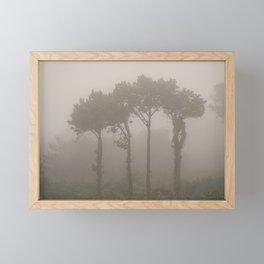 Four Pine Trees in the Fog Framed Mini Art Print