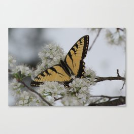 Eastern Tiger Swallowtail Butterfly Nestled Among Flowers Canvas Print
