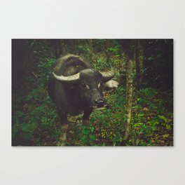 Silent Friend Canvas Print