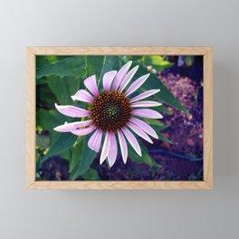 Echinacea Framed Mini Art Print