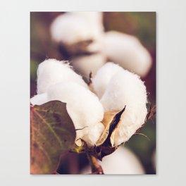 Cotton Field 24 Canvas Print