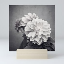 Black and White Dahlia Flower Photography, Grey Floral, Gray Neutral Nature Petals Mini Art Print