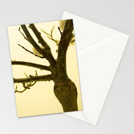 Snow settled on a bare tree Stationery Cards