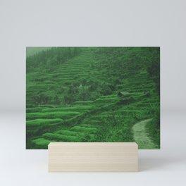 Green Rice Fields of Vietnam. Landscape Photography. Mini Art Print