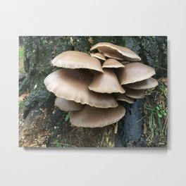 Bloomington Mushrooms Metal Print