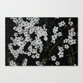 Sow Canvas Print