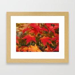 Fiery Autumn Maple Leaves 4966 Framed Art Print