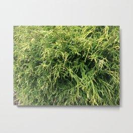 Combed Greens Metal Print