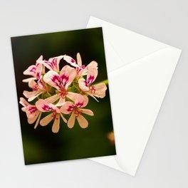 Rose Geranium Flower Stationery Cards