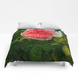 Complex Pink Rose Comforters