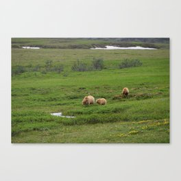 Grizzly bear and yearling cubs graze in Denali Canvas Print