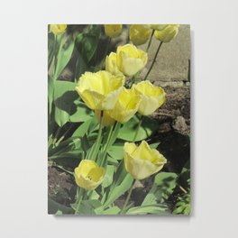 Tulips Photography | Yellow Tulips | Floral Art Print | Botany | Spring Tulips Metal Print