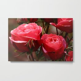 Valentin´s Roses Metal Print