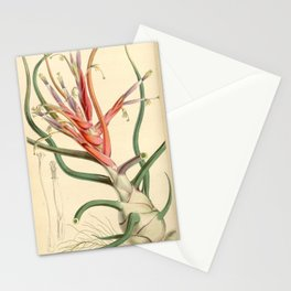 Tillandsia bulbosa var. picta Stationery Cards