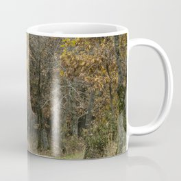 The path in the forest Coffee Mug