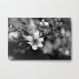 Blackberry Flower Metal Print