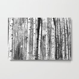 Aspens in Black + White Metal Print