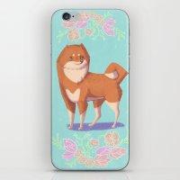shiba iPhone & iPod Skins featuring Shiba Inu by Charlotte Foley