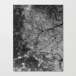 treesky Canvas Print